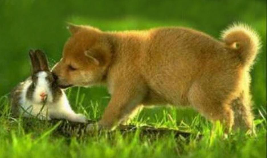 Celebramos el Día del Animal el 29 de abril