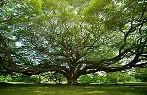 Un gran homenaje a la naturaleza Día del Árbol